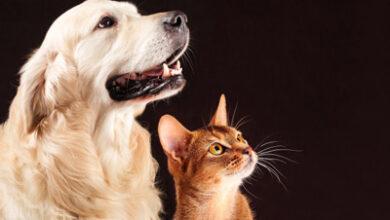 چه حیوان خانگی برای نگهداری مناسب است